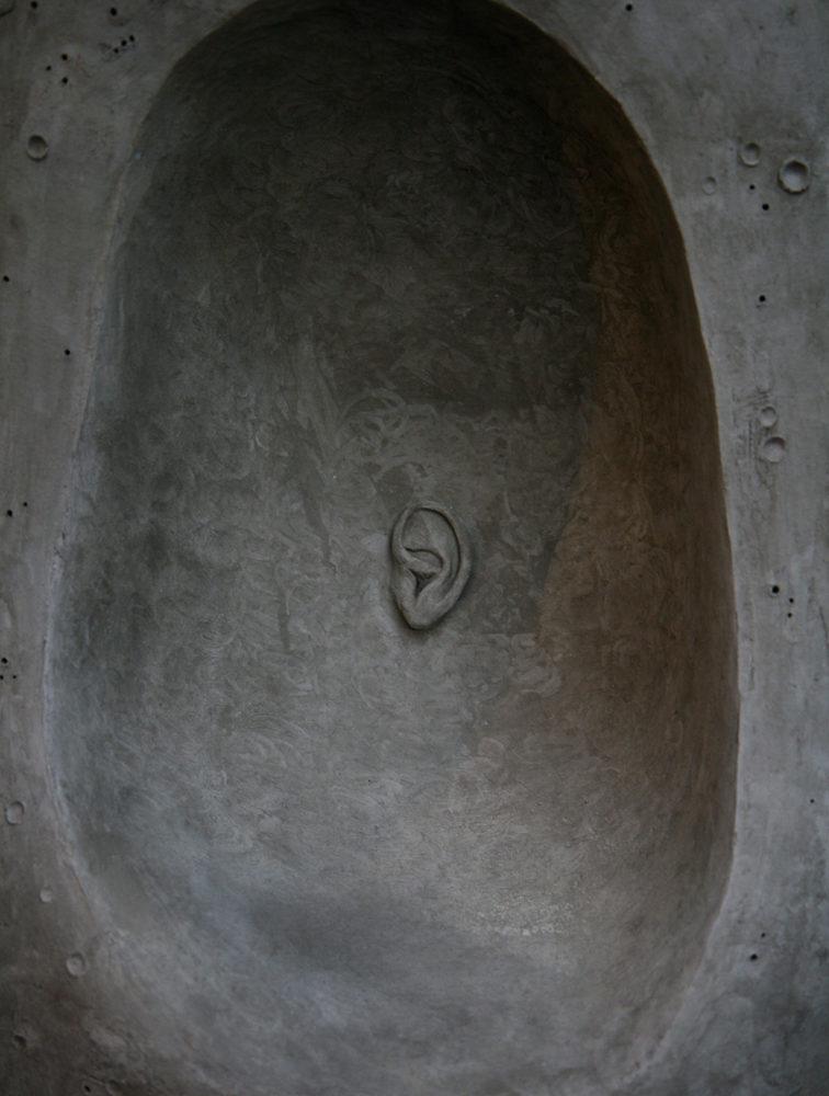 Tanuki-(ventre)-©-Bertrand-Secret